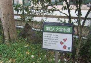 15-植物解說看板